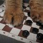 Летающие шашки - польза или вред?